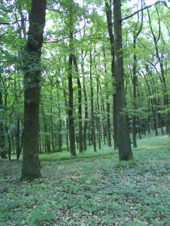 FOTKA - v tichu lesa