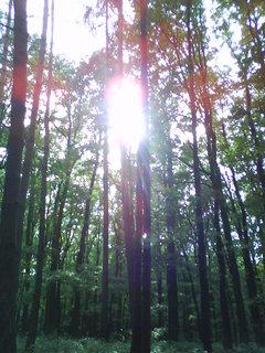 FOTKA - v tichu lesa,