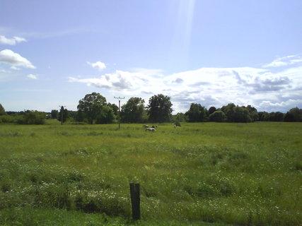 FOTKA - slunný den na pastvě