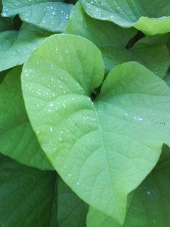 FOTKA - květina po dešti