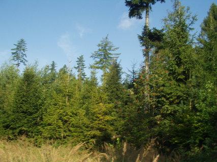 FOTKA - Procházka lesem