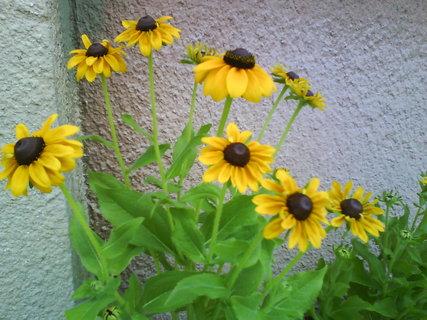 FOTKA - letní kvítí