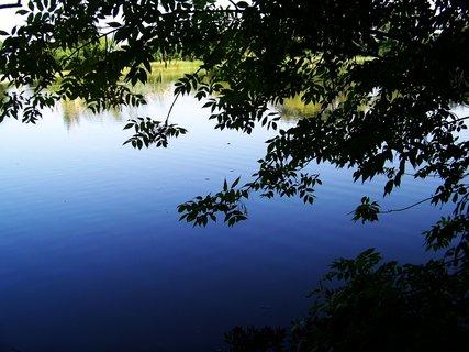 FOTKA - vyjížďka na kole 21.8.2011, rybník ve Vestci..