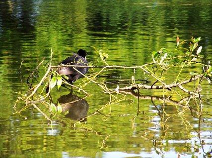 FOTKA - vyjížďka na kole 21.8.2011, rybník ve Vestci, schovka