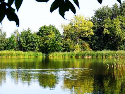 FOTKA - vyjížďka na kole 21.8.2011, Vestec - rybník, kačka uhání...