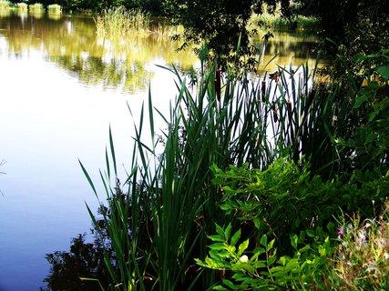 FOTKA - vyjížďka na kole 21.8.2011, Vestec - rybník, u břehu
