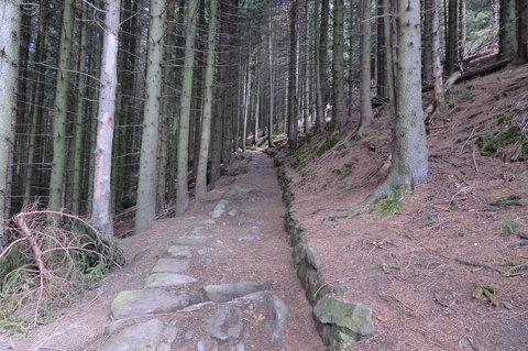 FOTKA - Lesem, štětovanou cestou