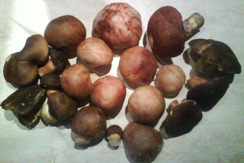 FOTKA - při procházce v lese jsme pár hub našli
