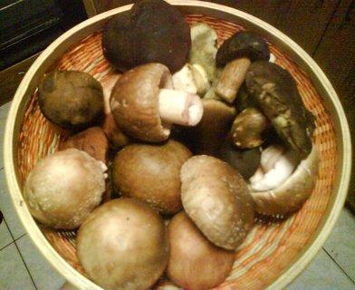 FOTKA - letošní houby