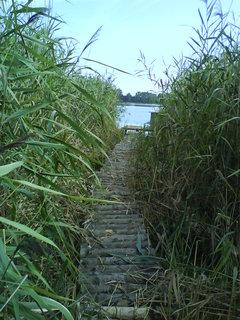FOTKA - dřevěná lávka rákosím k vyhlídce na rybník