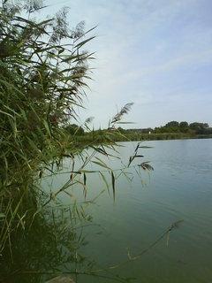 FOTKA - pohled z vyhlídky na rybník..