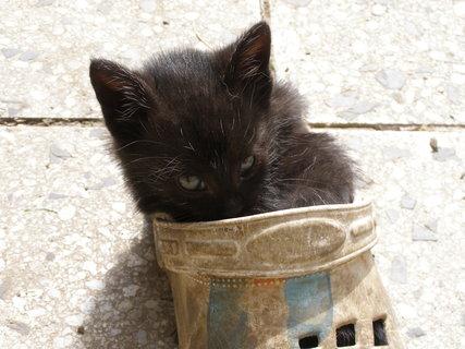 FOTKA - malé kotě,spalo v botě