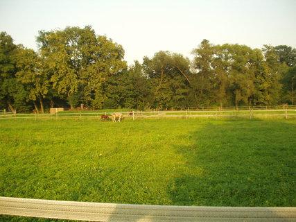 FOTKA - Příroda, koně
