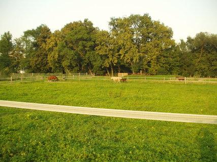 FOTKA - Příroda, koně v ohradě