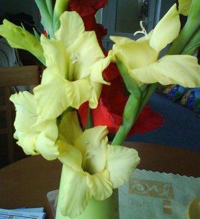 FOTKA - květy.