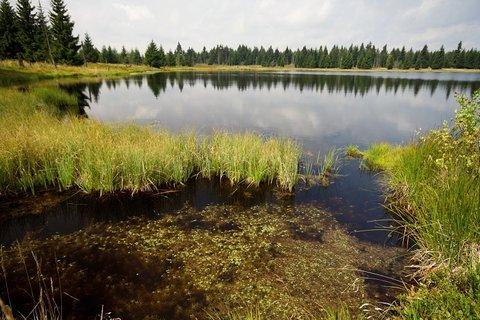 FOTKA - Novoveský rybník