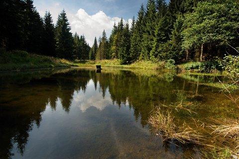 FOTKA - Lesní jezírko