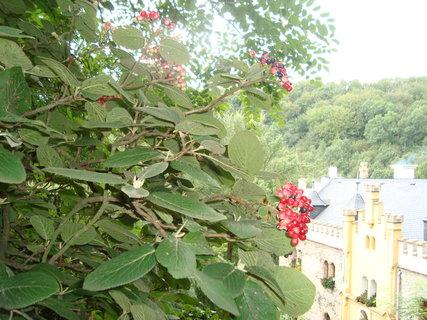 FOTKA - Hauenštejn - pohled z arboreta