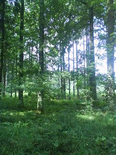 FOTKA - v lesním tichu
