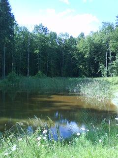 FOTKA - v lesním tichu....