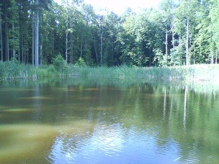 FOTKA - v lesním tichu,