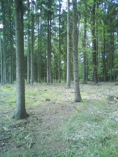 FOTKA - v lesním tichu,,