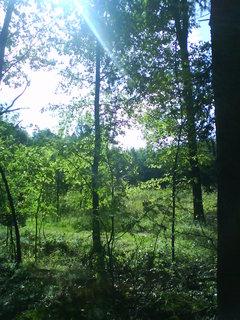 FOTKA - v lesním tichu,,,,,