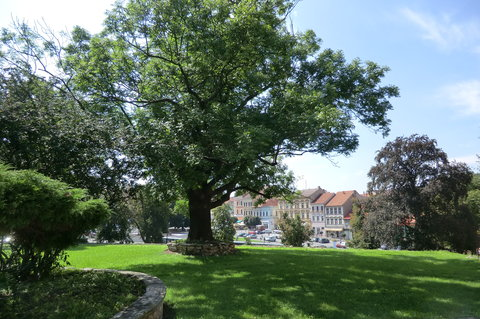 FOTKA - Krásný dub v zámeckém parku