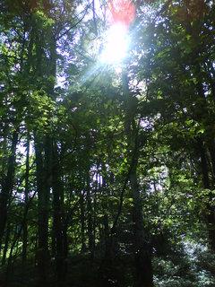 FOTKA - na procházce v lese...