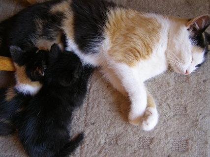 FOTKA - svačinka u maminky