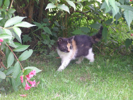 FOTKA - Mína se odvážila až na zahradu