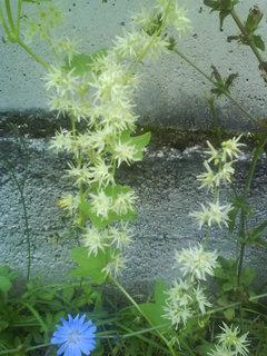 FOTKA - drobná kvítka pro mne neznámé květiny
