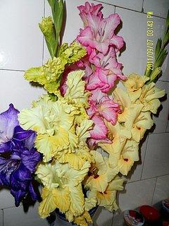 FOTKA - Gladioly ve váze