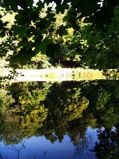 FOTKA - Dolnomlýnský rybník - odrazy