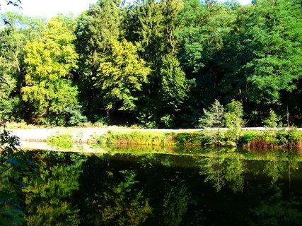FOTKA - Dolnomlýnský rybník - odrazy stromů...