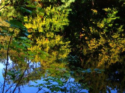 FOTKA - pohled na hladinu rybníka ..