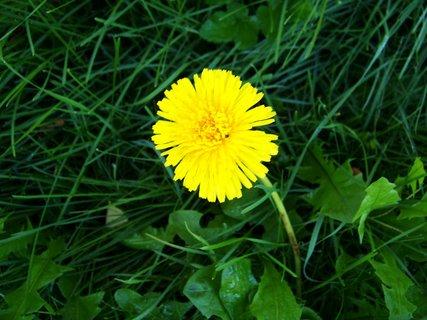 FOTKA - jako na jaře .,,,,