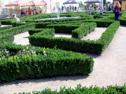 FOTKA - Buxusový labyrint jeden z deseti v zámeckém parku