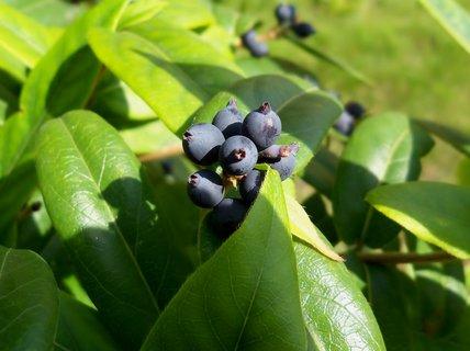 FOTKA - Podzimní plody zámecké zahrady