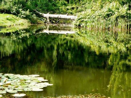 FOTKA - Zrcadlení spadlého stromu