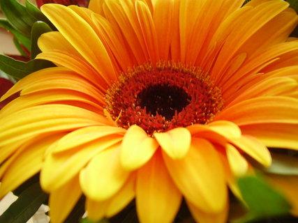 FOTKA - detail květinky    ..
