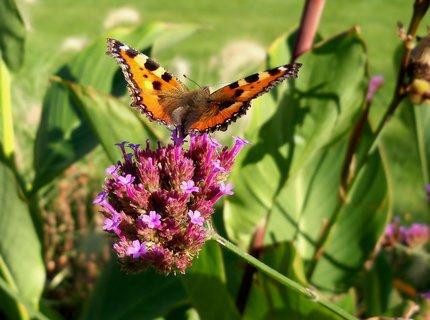 FOTKA - Motýlkování v lázeňském parku