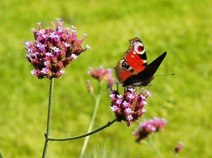 FOTKA - Motýlkování v parku