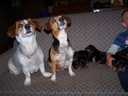 FOTKA - Oddan� ps� pohled
