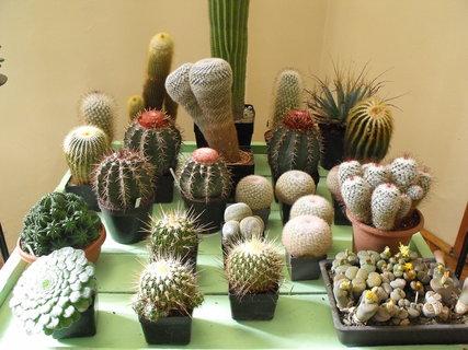 FOTKA - Výstava kaktusů