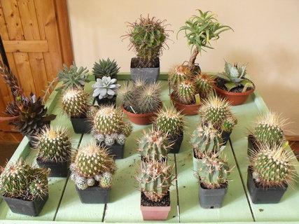 FOTKA - Další kaktusy na obdiv