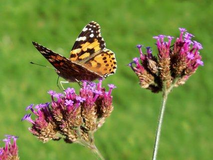 FOTKA - Motýlkování v Poděbradech