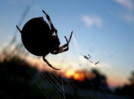 FOTKA - Pavouk vítá nový den