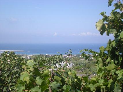 FOTKA - výhled na moře z vinice