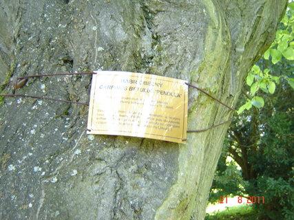 FOTKA - Hamzův park a arboretum Luže - Košumberk,.,.,.,.